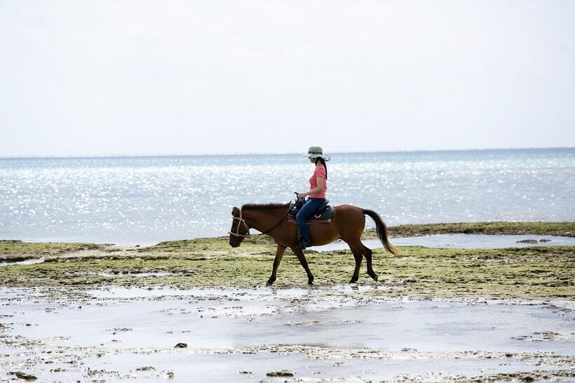 小柄でかわいい馬に乗って島内を散歩できる。