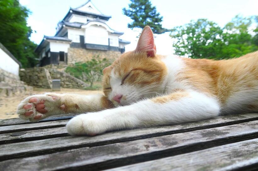 岡山県・備中松山城に猫城主。城下町は「寅さん」ゆかりの地