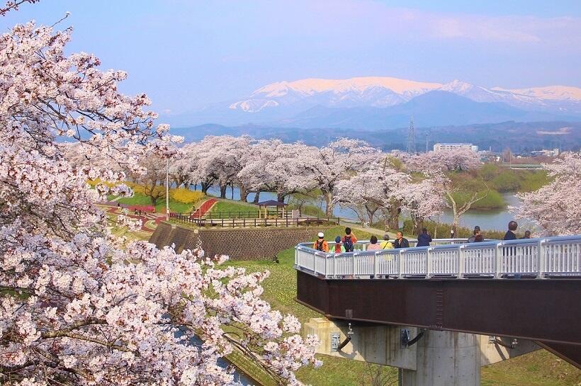 東北桜巡礼(2)蔵王、川、桜、鉄道のシンフォニー