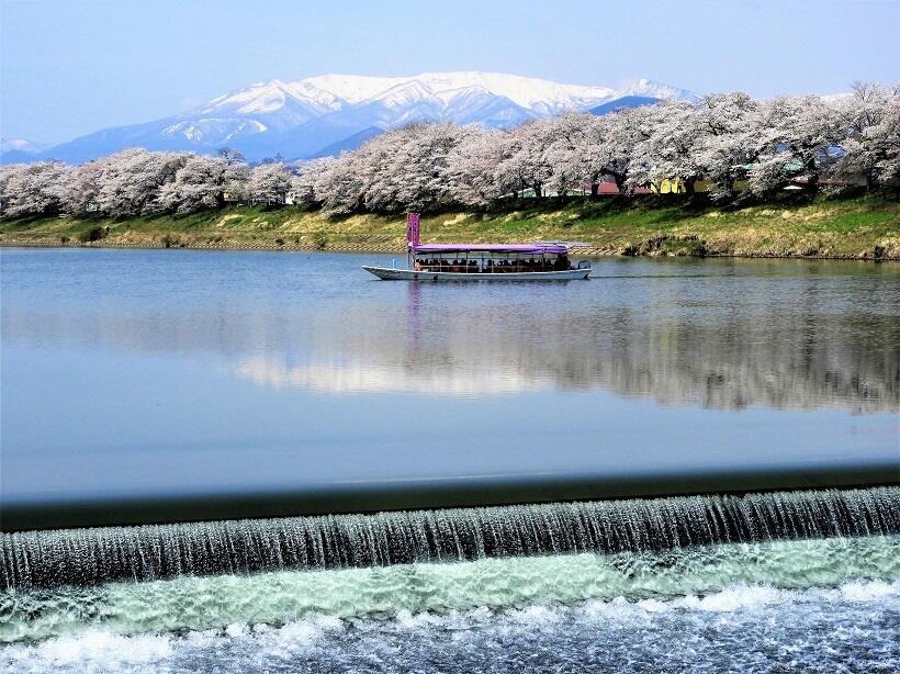 白石川に設置された韮神堰(にらかみせき)。段差を落ちる水の飛沫(ひまつ)が美しい。川面に桜並木と「逆さ蔵王」が映る