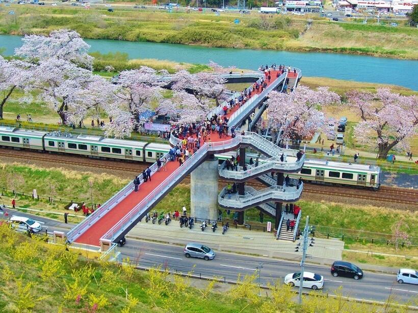 しばた千桜橋からは東北線と川沿いの桜並木を見下ろせる(写真/柴田町)