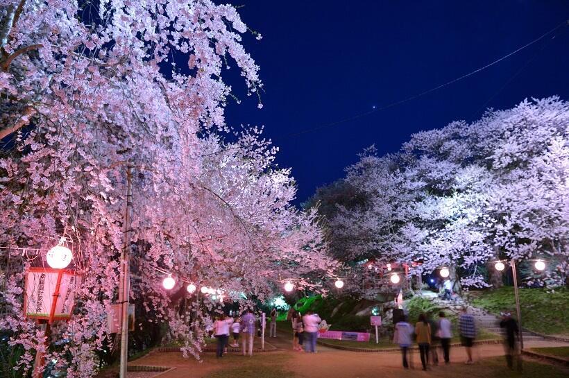 ライトアップされた桜を楽しめる遊歩道には提灯も並ぶ