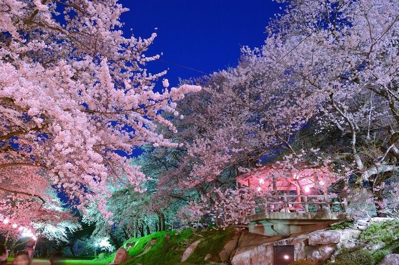 烏帽子山公園では、桜の時期にはライトアップも行われる