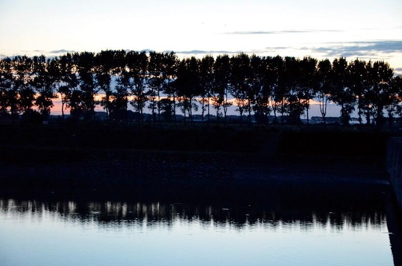 モン・サン=ミッシェルに向かう途中で見た海岸の木々