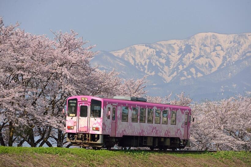 東北桜巡礼(3)花見はフラワー長井線に乗って