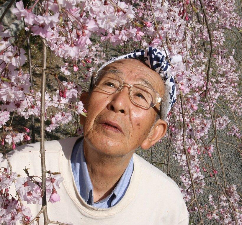 桜守・16代目佐野藤右衛門「姥桜になってや!」|岐阜県/福島県|たびよみ