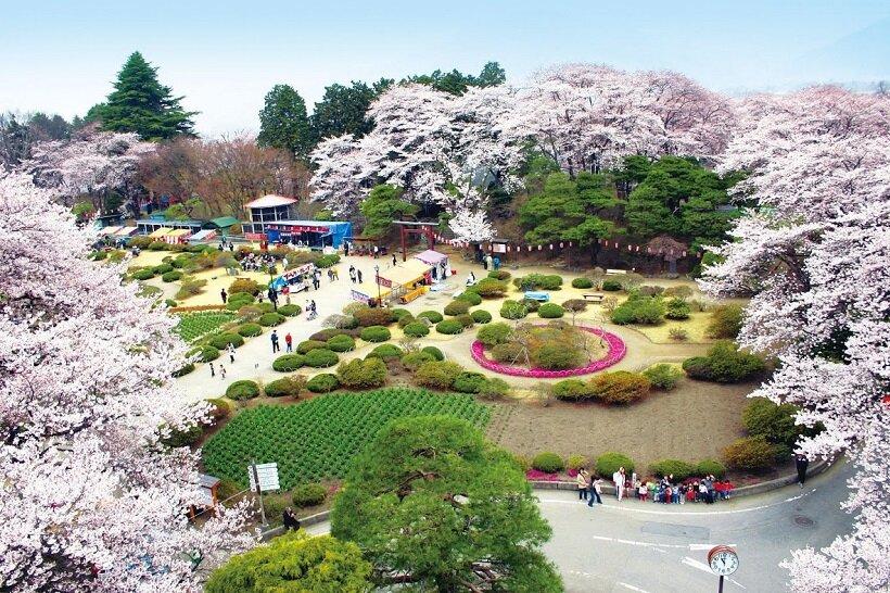 春には桜が咲きる沼田公園