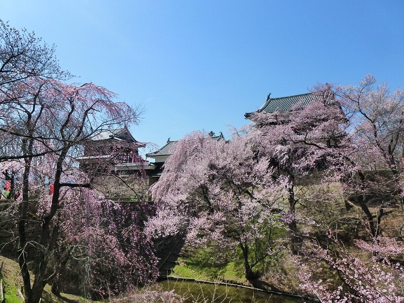 桜の名所・上田城