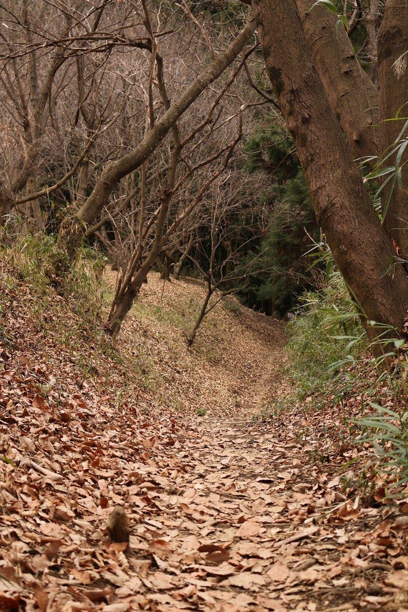 本丸址へ続く竪堀の散策路