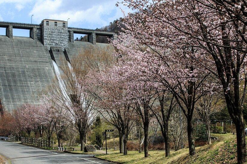 春は桜に彩られる日向見公園