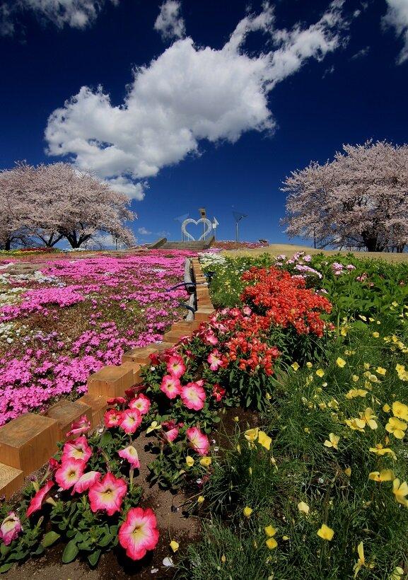 花と緑のぐんまづくり2020in藤岡