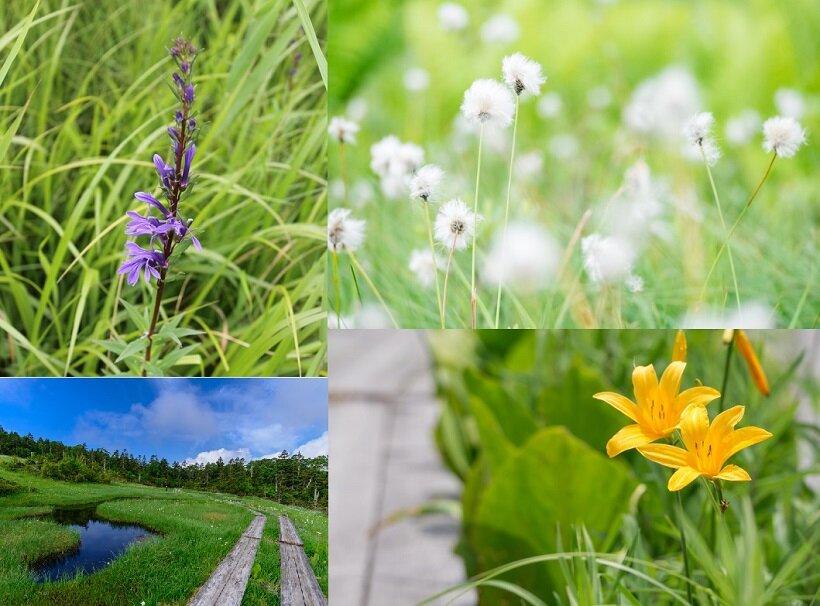 尾瀬の花と風景