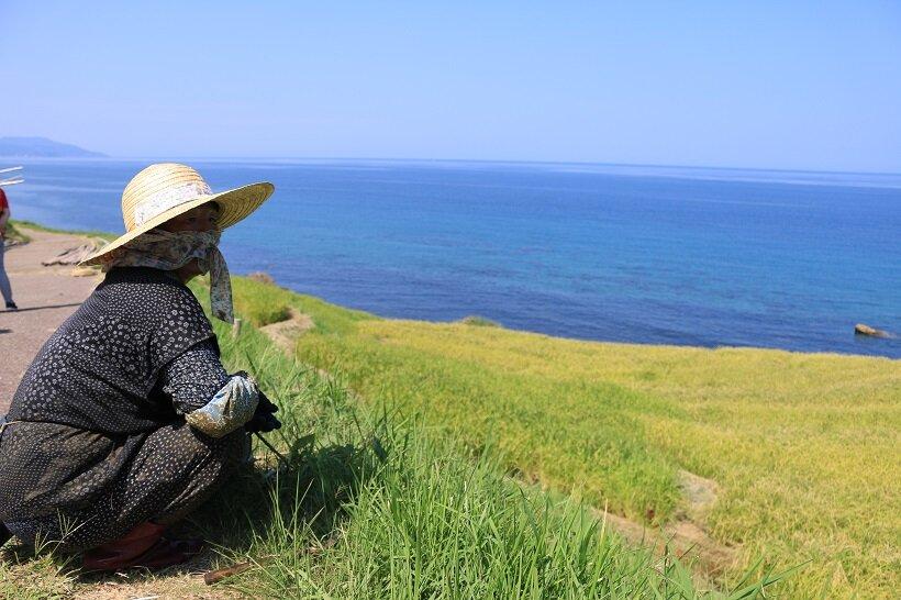 「いつ見ても、いいね」と、作業の手を休め千枚田を眺める垣内文子さん