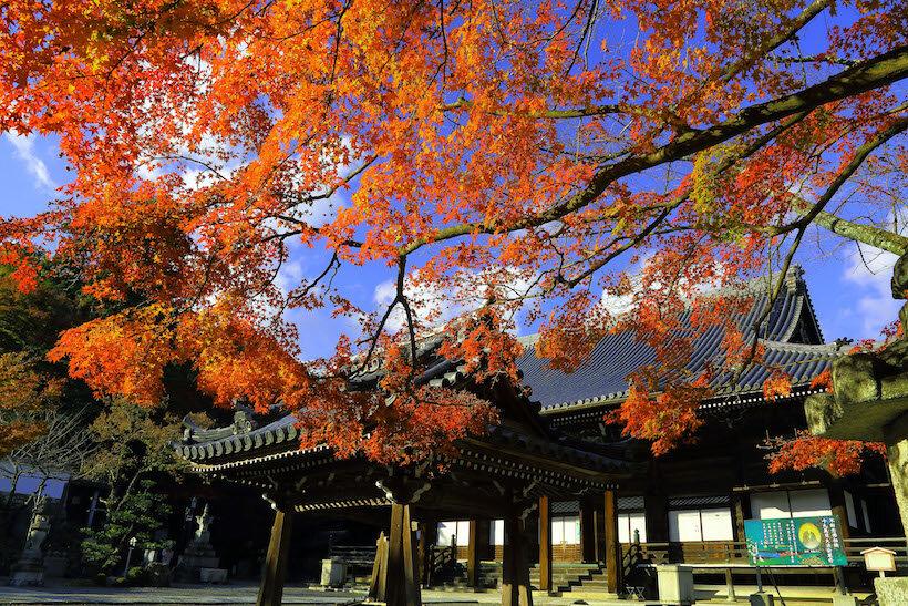 紅葉に覆われる参道を抜けて明智光秀ゆかりの西教寺へ(1)