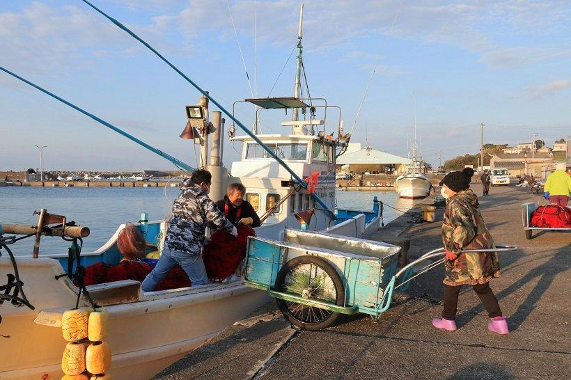 活気あふれる朝の和具漁港。夕方には海女の作業が見られる
