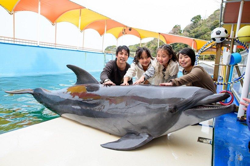 バンドウイルカに触れられるイルカ島のイルカタッチは1人800円(先着順)