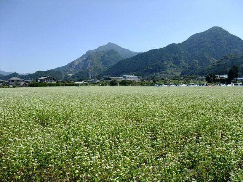 そば畑の向こうに武甲山(写真左奥)がそびえる
