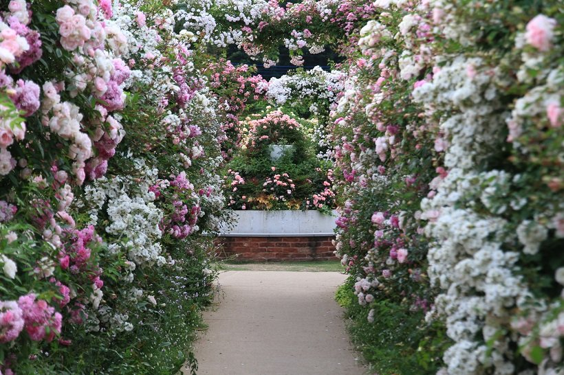 「花と湯の町」に日本一を目指す花園がグランドオープン  中之条ガーデンズ【群馬県中之条町】