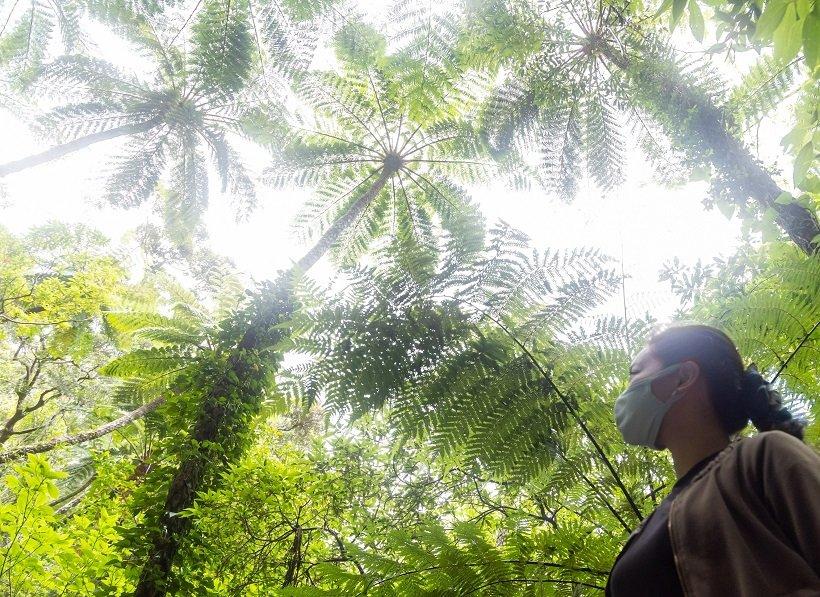 世界遺産登録! 奄美大島の原生林散策とマングローブカヌーツアー