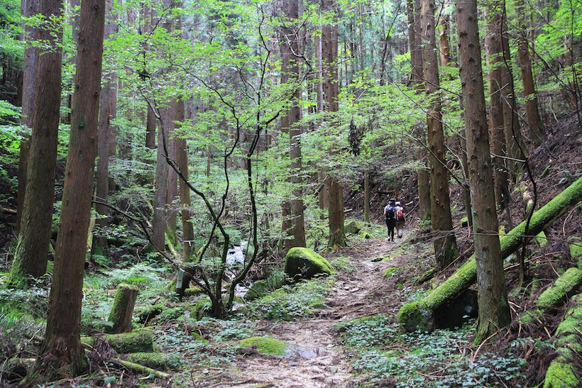 杉木立ちの山道