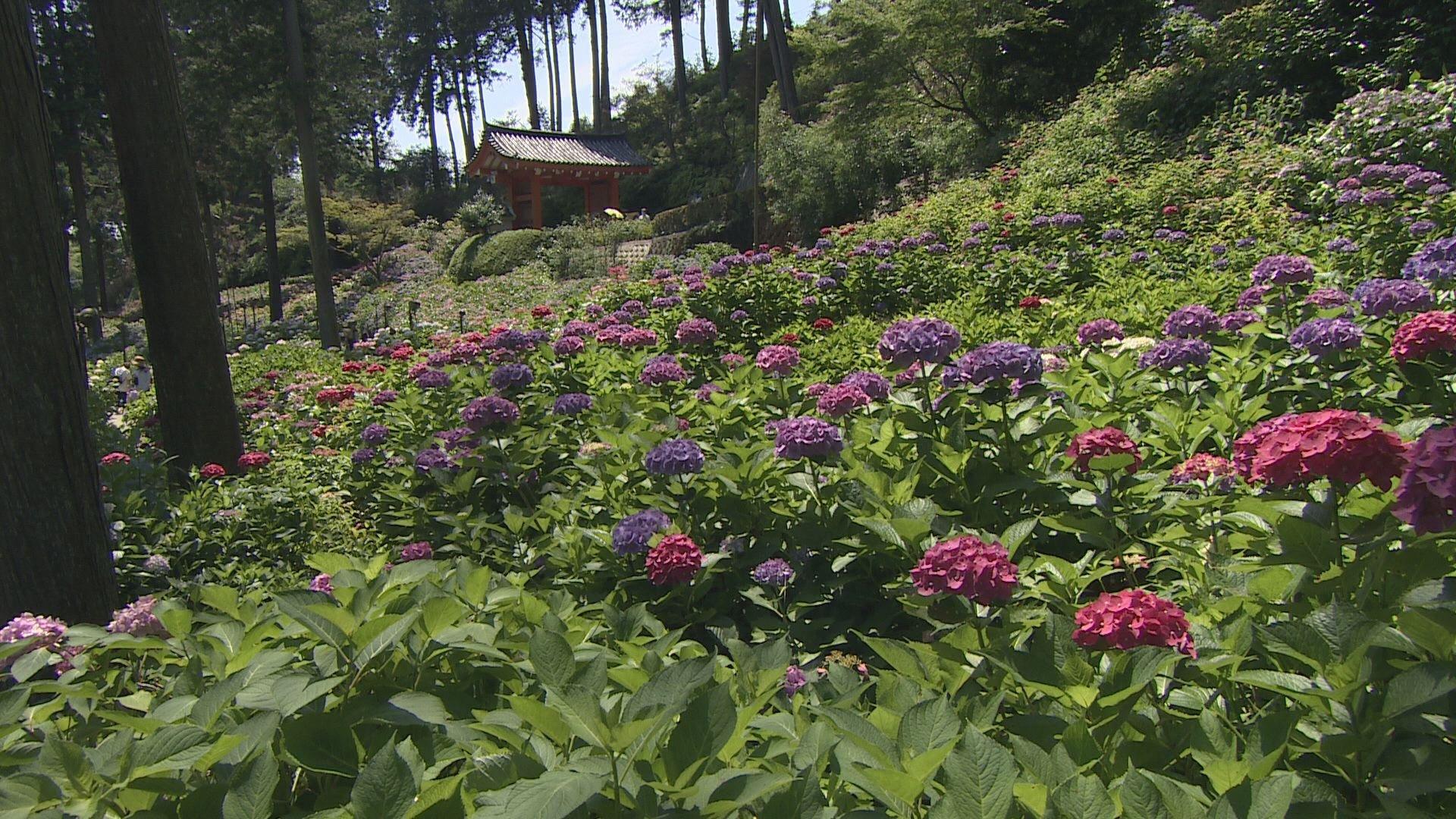 荘厳な花の寺で京都の夏を味わう